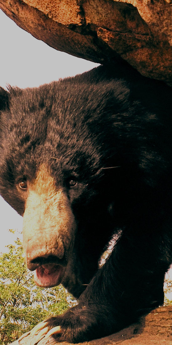 Daroji Sloth Bear Sanctuary